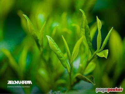 Japońska zielona herbata